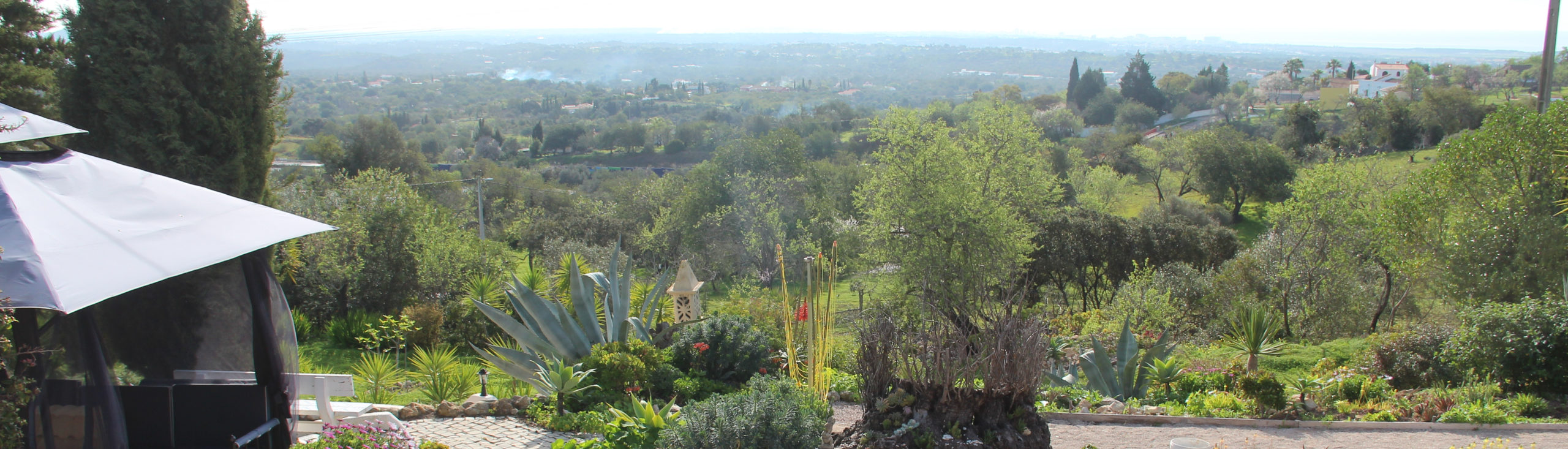 Algarve Winter Gardening
